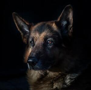 Cosa fare quando muore il cane?